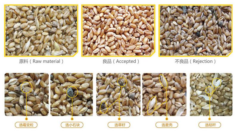 小麦色选效果.jpg